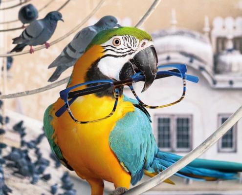 Bunte Acetat Brille